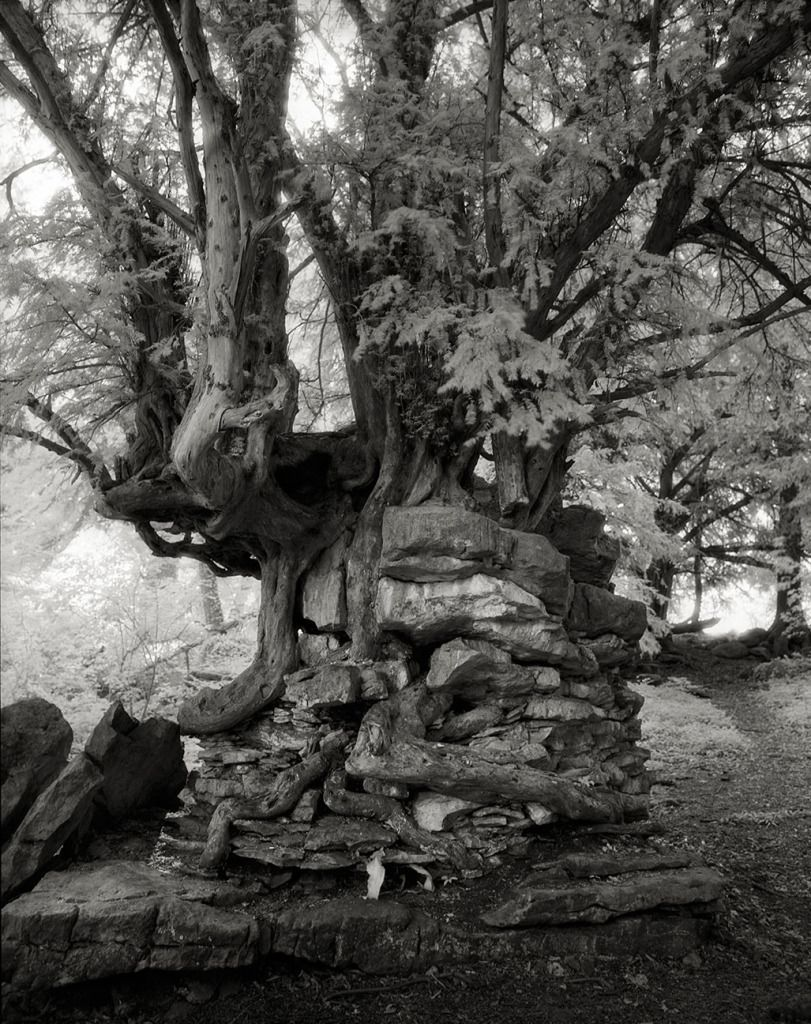 The Most Ancient Trees in The World - Devil's Pulpit (Chepstow, Wales). This tree growing on top of a pillar of rock, and itself resisted the winds and the rains, generating this resilience survivalist