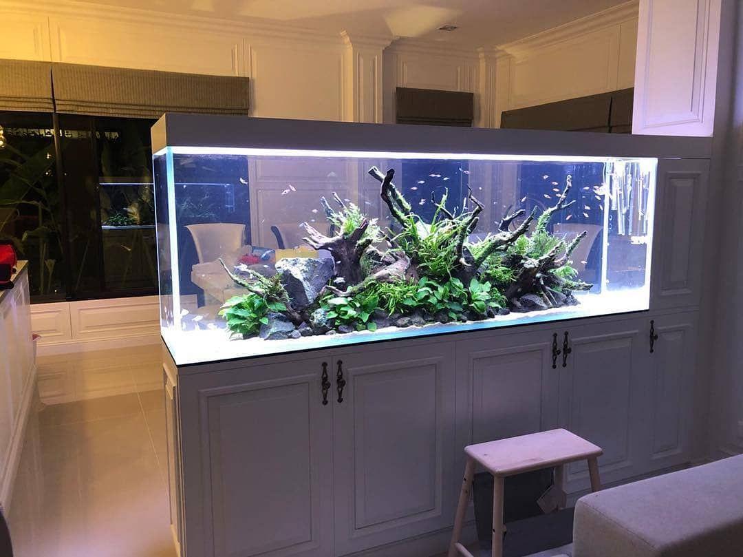 Peninsula Style Tanks Are Probably Our Favorite Aquarium Design Aquarium Decorations Aquarium