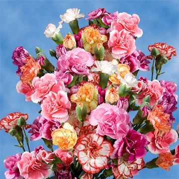 Assorted Mini Carnations Cheap In 2021 Carnation Flower Mini Carnations Flowers