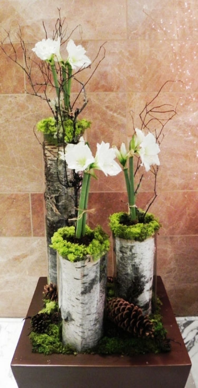 Amaryllis In Birch Tubes Designed By Timothy De Clue Design Www