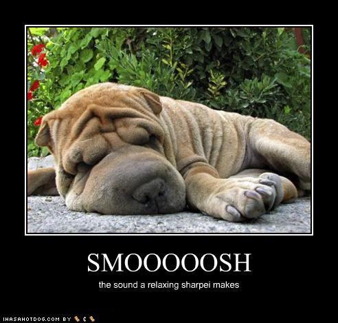 I Has A Hotdog Shar Pei Shar Pei Shar Pei Dog Wrinkle Dogs Free Funny Pictures