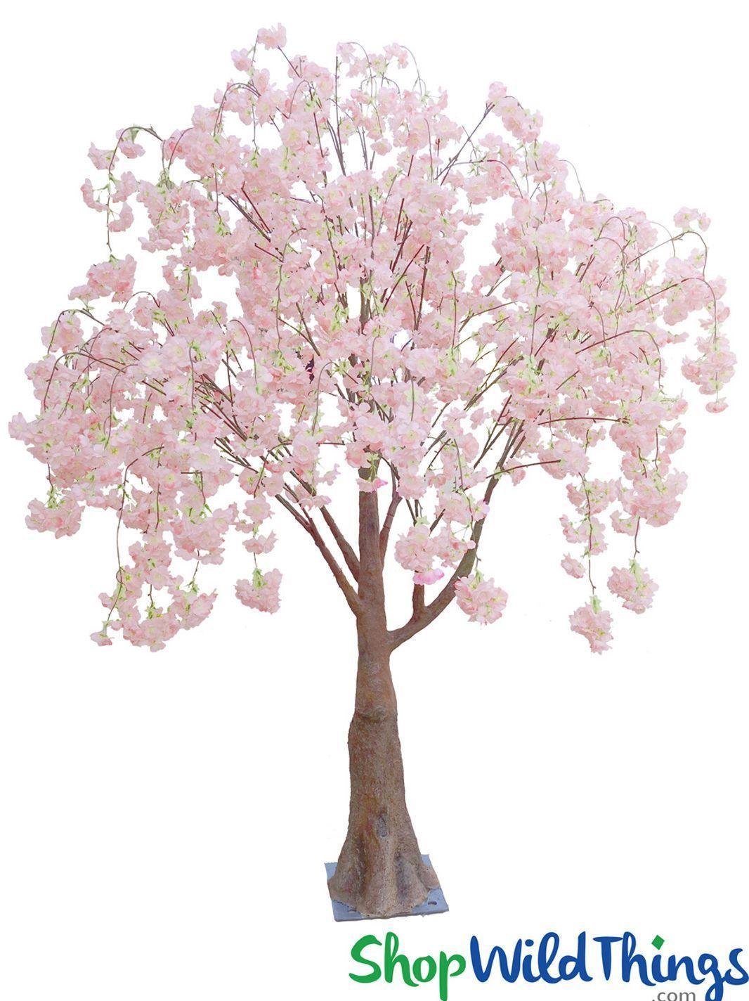 COMING SOON! Flowering Cherry Blossom Tree ExtraFull 6