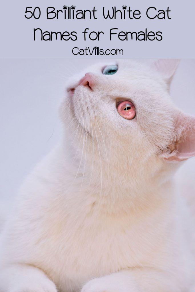 100 Brilliant White Cat Names for Male & Female Kitties