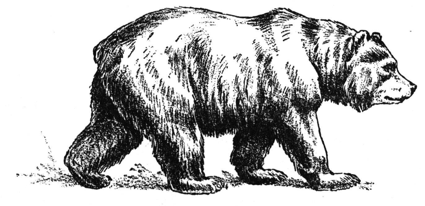 bear-5-coloring-page.jpg (1372×667) | Bears | Pinterest | Bears