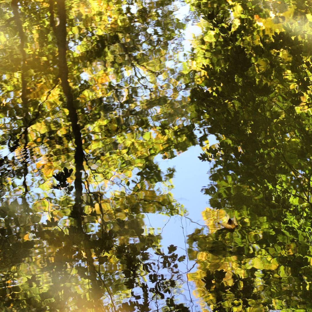 Fluss In Leipzig spiegelbilder im herbst am fluss in leipzig herbstfotos autumn