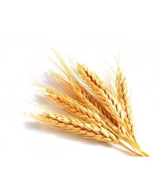 Wheat Germ Oil Virgin Unrefined Extracted from wheat kernel