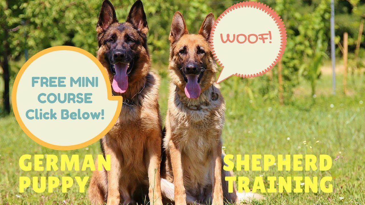 Obedience Training German Shepherd Dogs Free Mini Course Dog