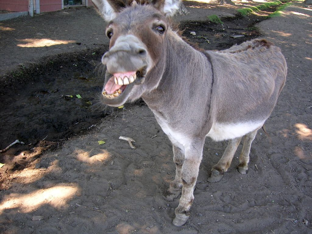 Get Out of My Face You Donkey midsummer nights dream