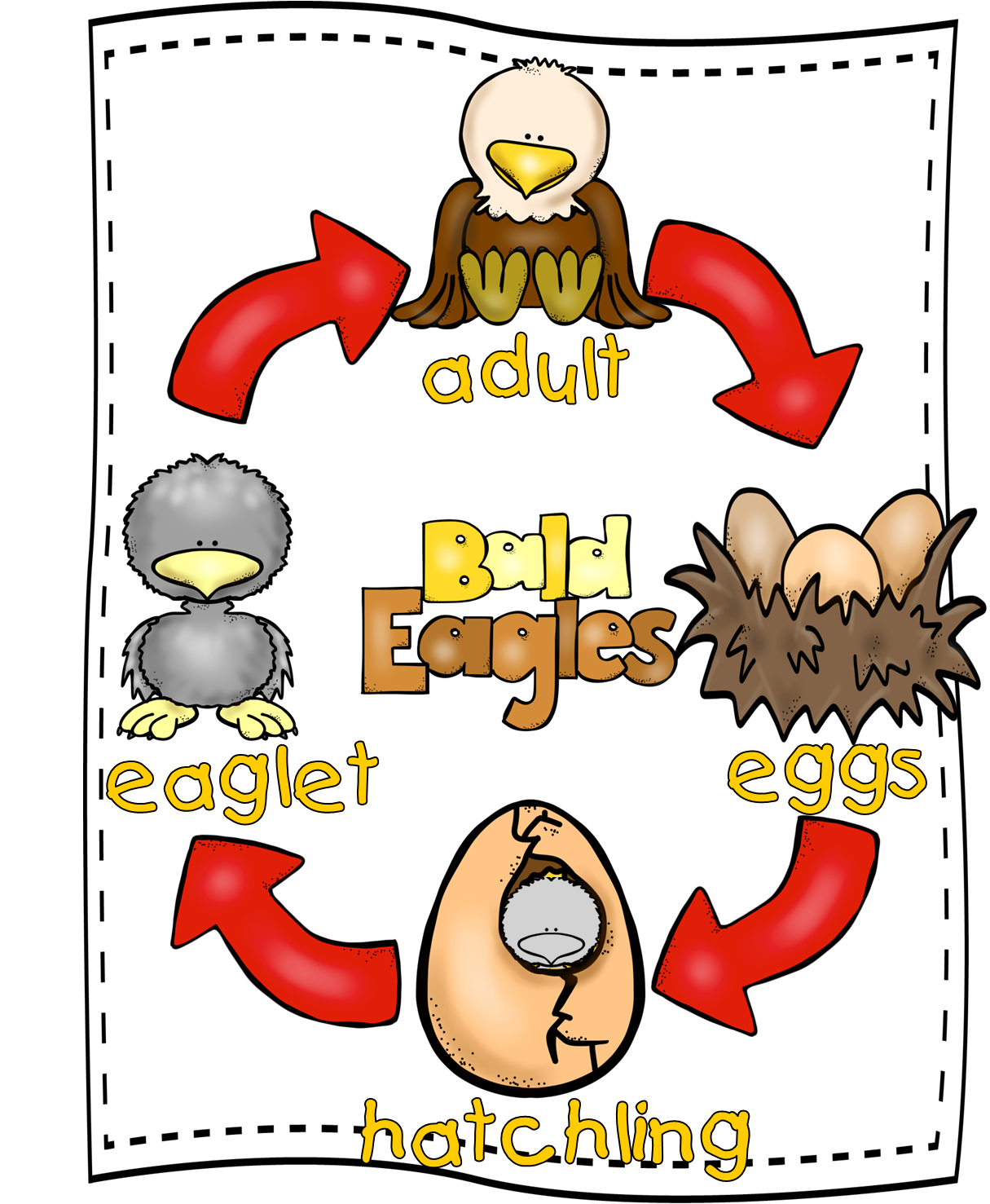 Eagle Life Cycle & Mini Unit free from First Grade Wow