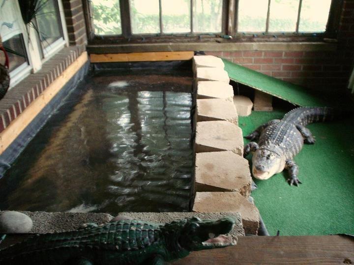 Indoor Gators Aviaries Amp Exhibits Reptile Enclosure