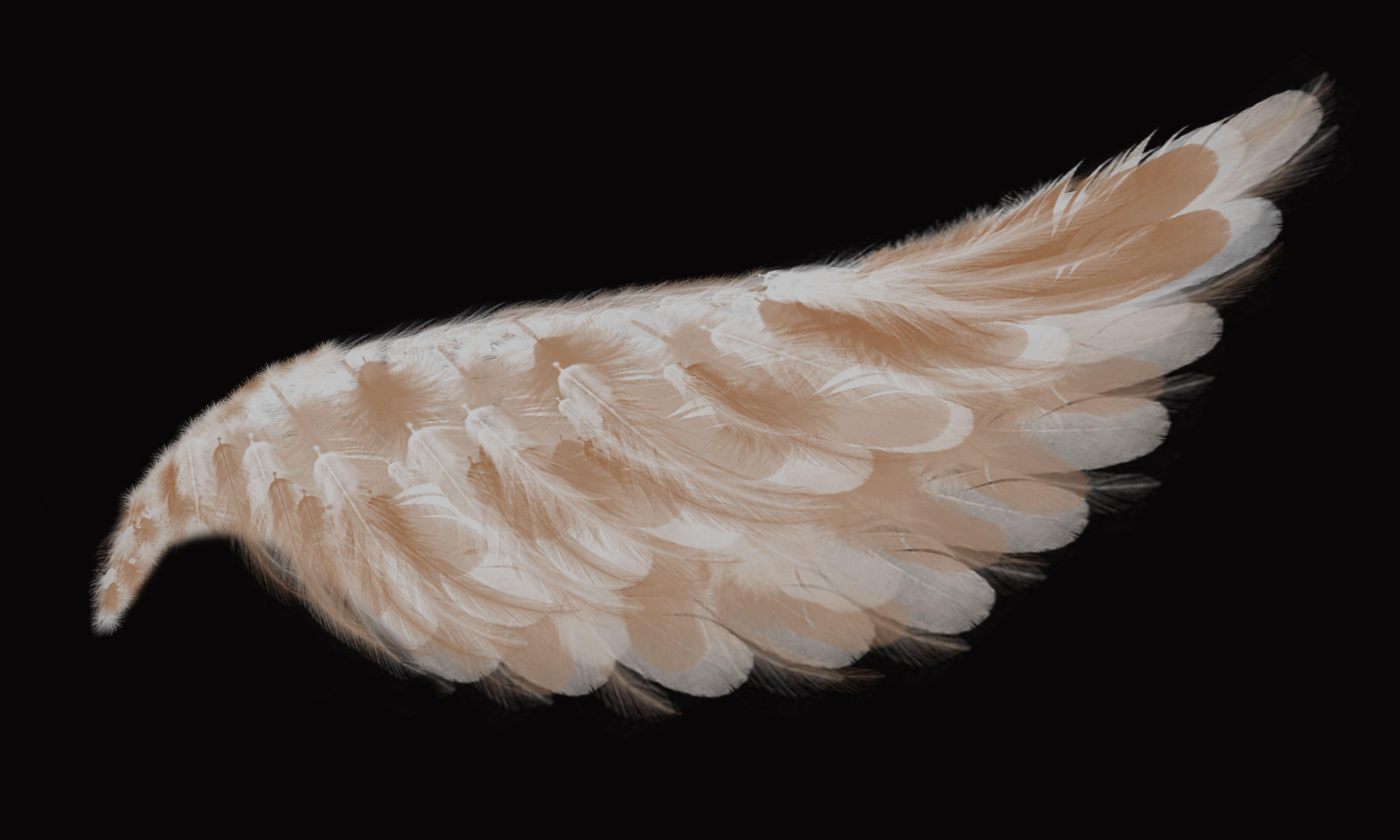латышских картинка крыло ангела поздравления днем рождения