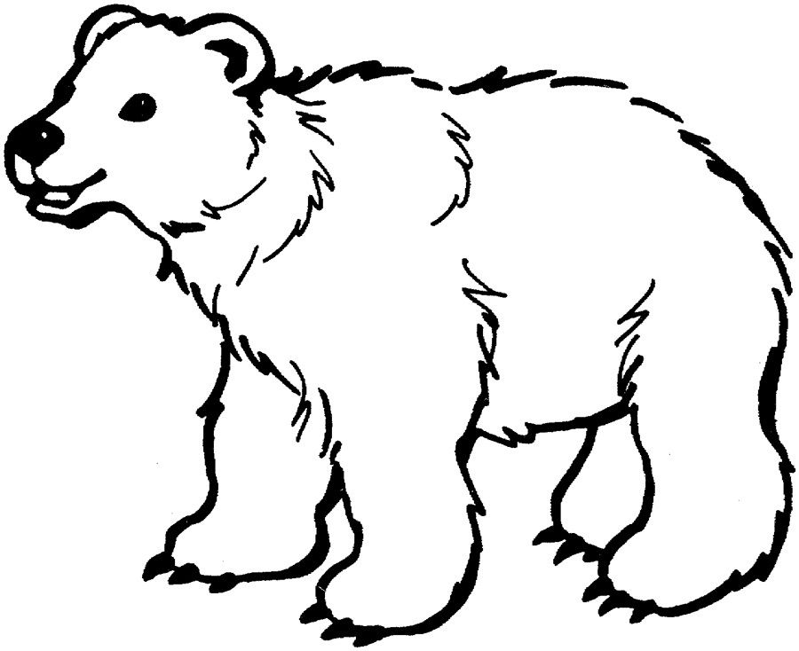 Bear Animal Coloring Pages Wild Page Young Bear Cub