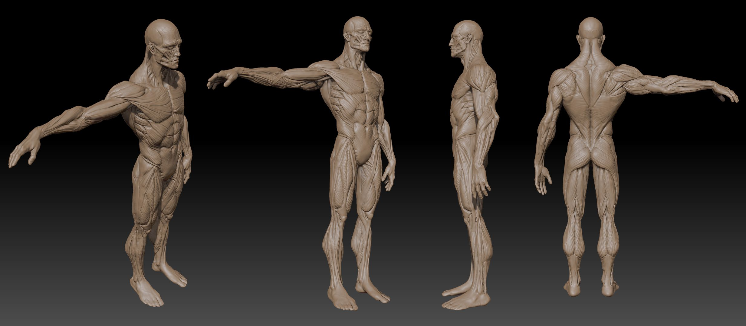Pin by Carlos Quiros on Anatomy: 3D Artistic: Male | Pinterest ...