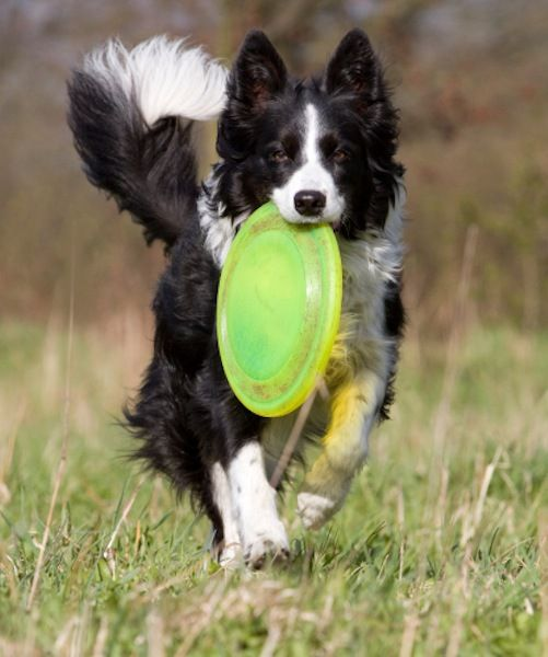 Beyond Fetch: 10 Other Games to Play with Your Dog