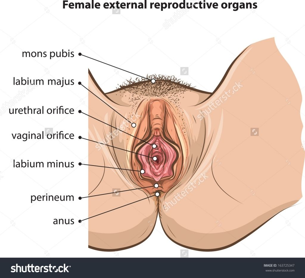 External Human Female Anatomy Diagram - DIY Enthusiasts Wiring ...