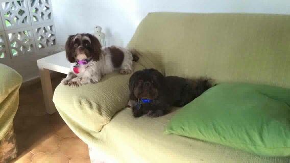 Past pups Lucy & Zero They live in Spain now!