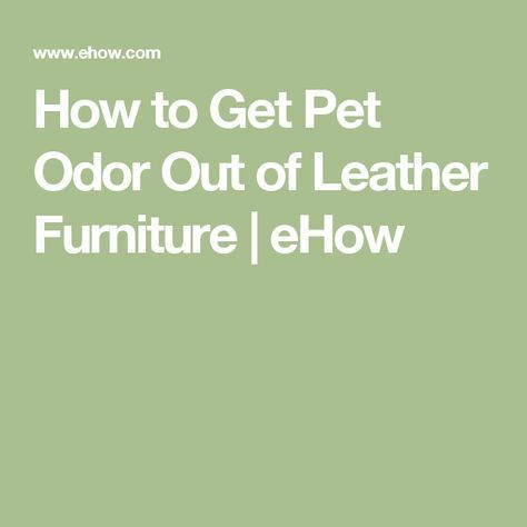 How To Get Pet Odor Out Of Leather Furniture Cat Urine