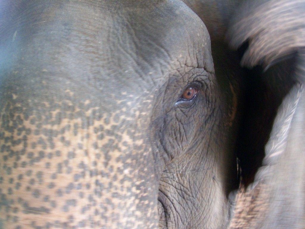 Elephant Nature Park, Thailand http://www.dtravelsround.com/2012/05/11/sign/
