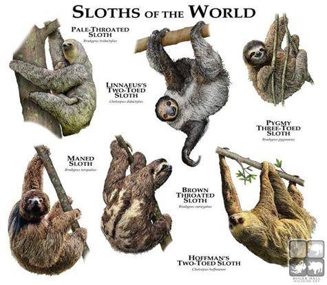 Imagen relacionada   Animales pintados   Pinterest   Animales ...