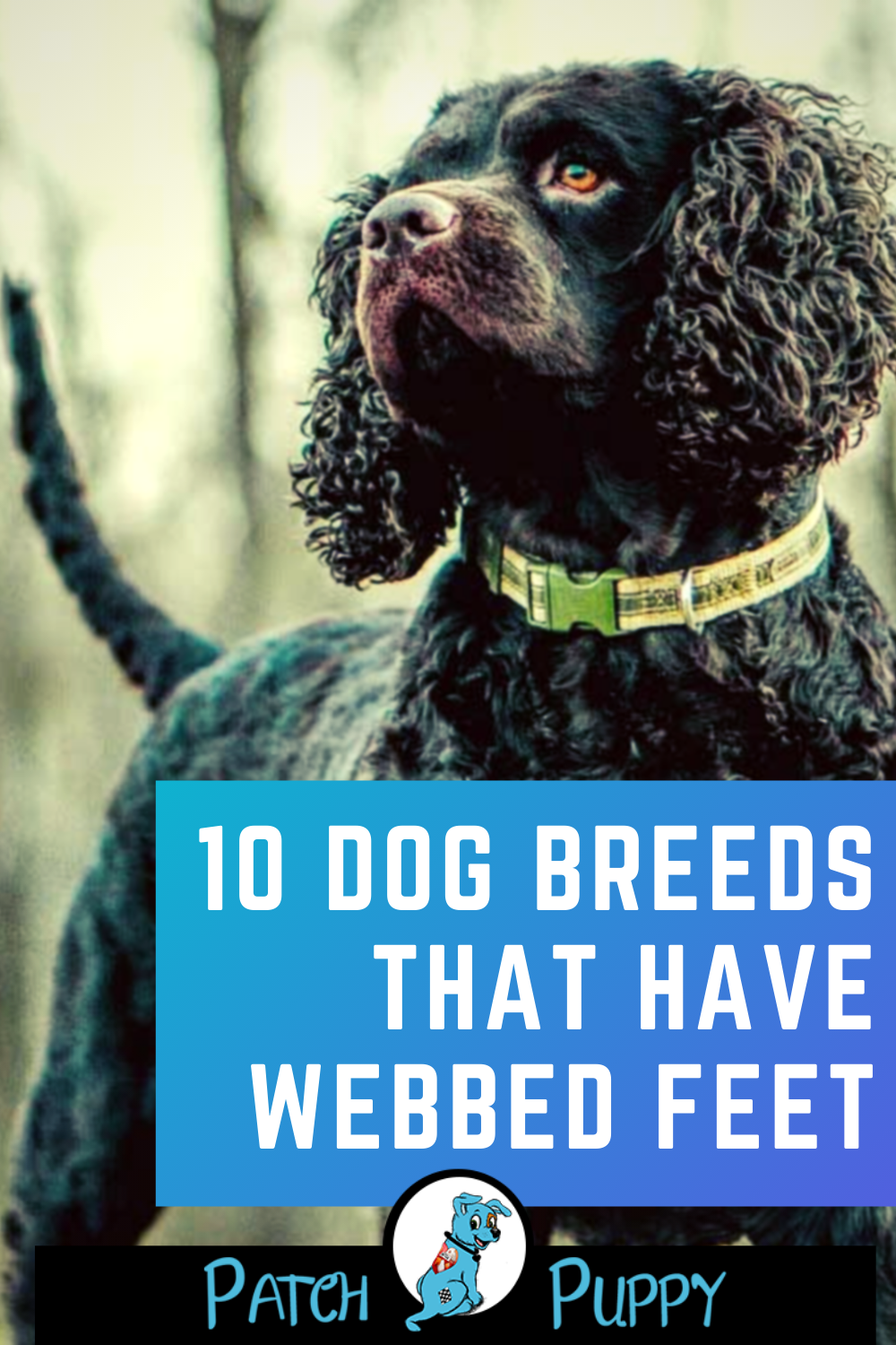 10 Dog Breeds That Have Webbed Feet In 2020 With Images Dog Breeds
