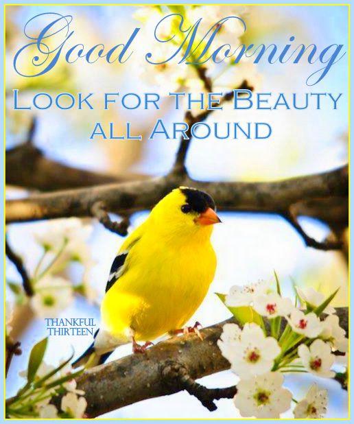 Good Morning Blossoms Yellow Bird Yellow Finch Backyard Birds