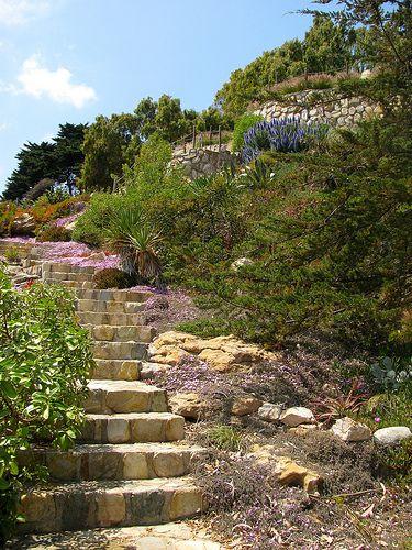 Escalera y vegetación costera de Papudo