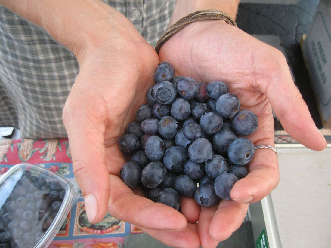 Berry season local nospray upick options berries