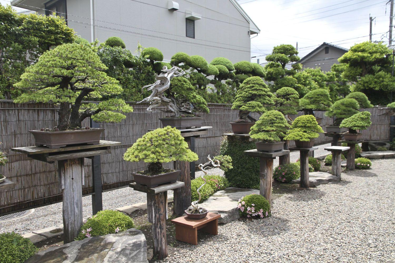 Japan Satsuki Bonsai Tour Part 2 Bonsai Garden Japanese Bonsai