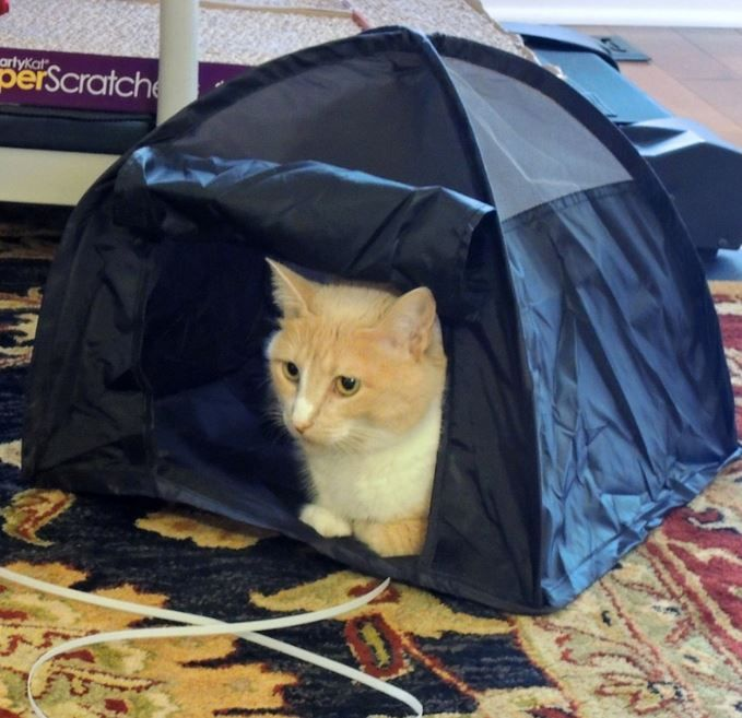 5371e023c8 You can now buy teeny tents for your cats to camp out in (Gallery ...