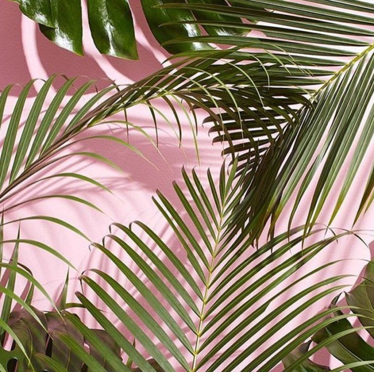 GenZ Green Is The New Millennial Pink Leaves wallpaper