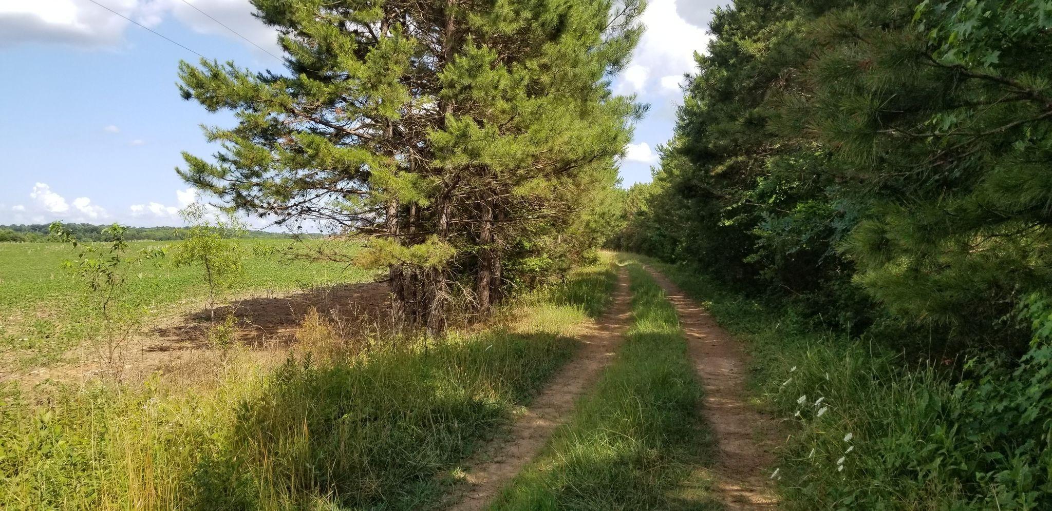 Take A Suspension Bridge Hike Through Buffalo Creek A 393 Acre Preserve In North Carolina In 2020 Experience Nature Buffalo Creek North Carolina
