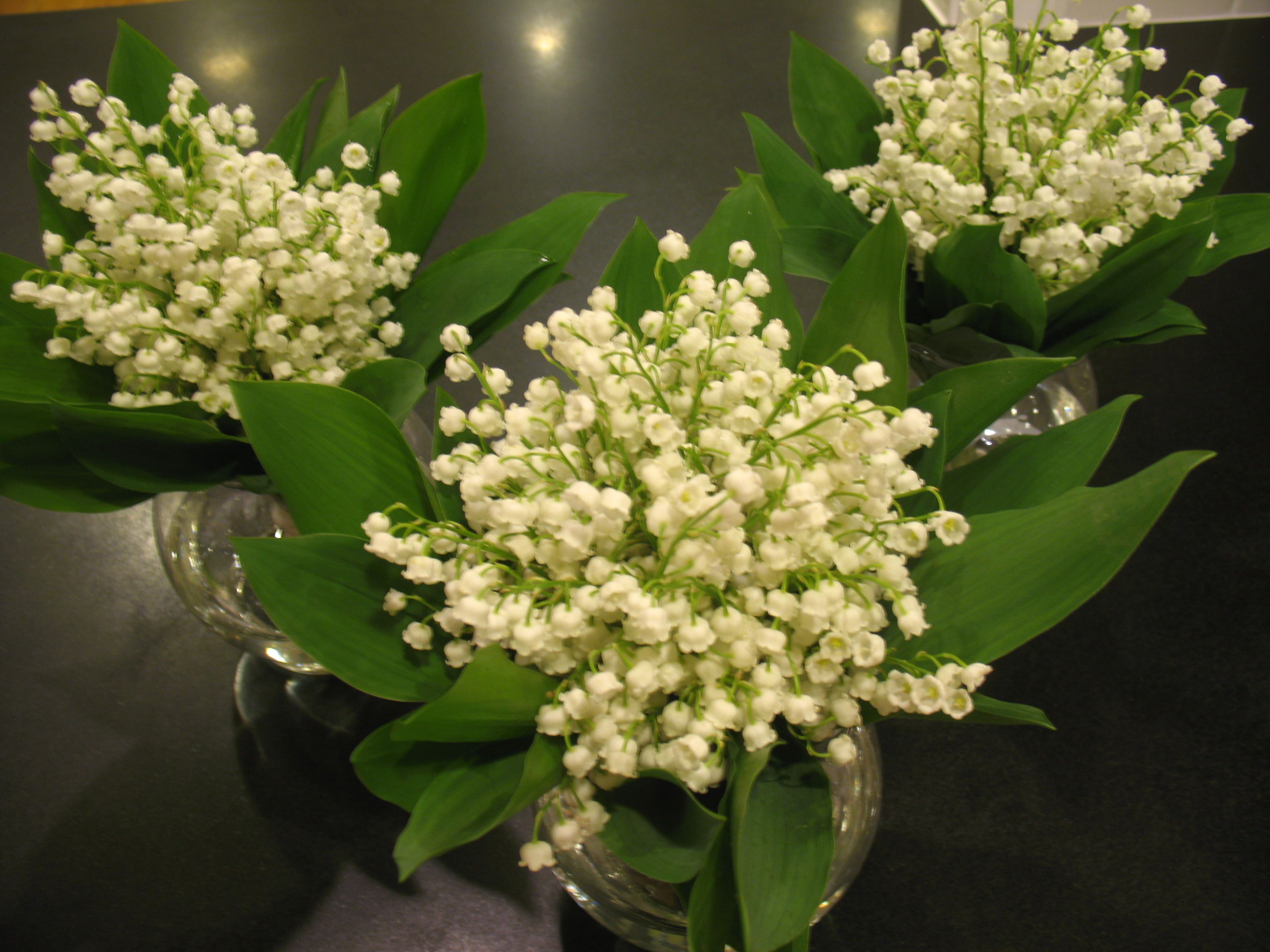 Lov lily of the valley flowers of a lavender of a lily of the lov lily of the valley izmirmasajfo