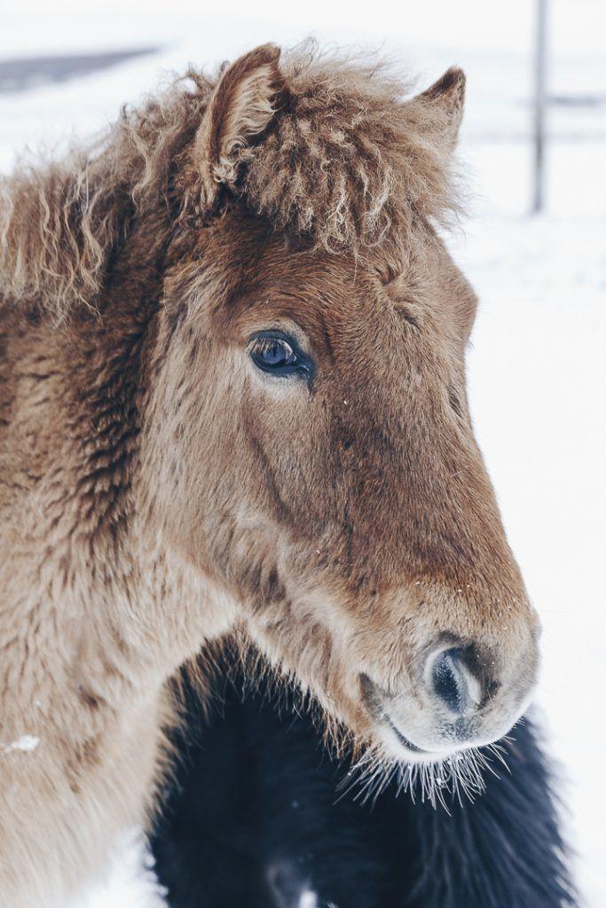 Combien coute un voyage en Islande en hiver ? Budget pour 2 - Combien Coute Une Extension De Maison