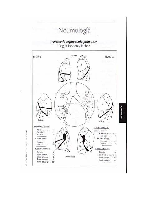 Pin by Andres Sanchez on Geriatrics / Internal Medicine