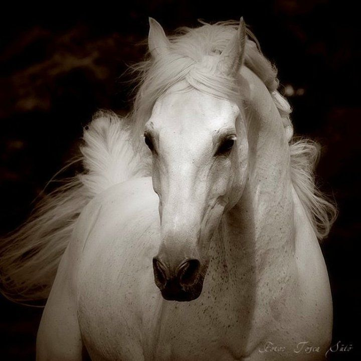 Breathtaking Horses Animals Horse Love