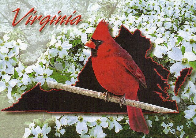 What are the Virginia state animals?