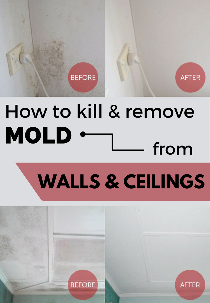 How to kill remove mold from walls and ceilings for How to get rid of mold in the bathroom walls