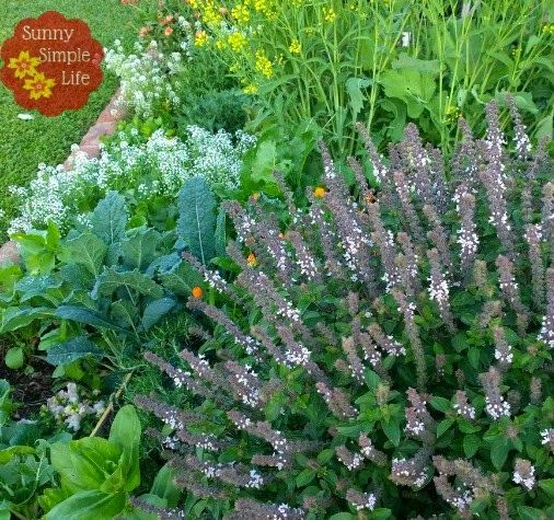 Late Fall Garden - What I Am Planting Now
