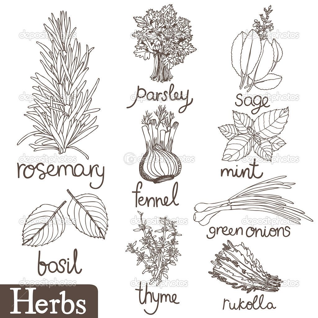 Herb drawings | Book of Shadows | Pinterest | Bordado, Cheff y ...