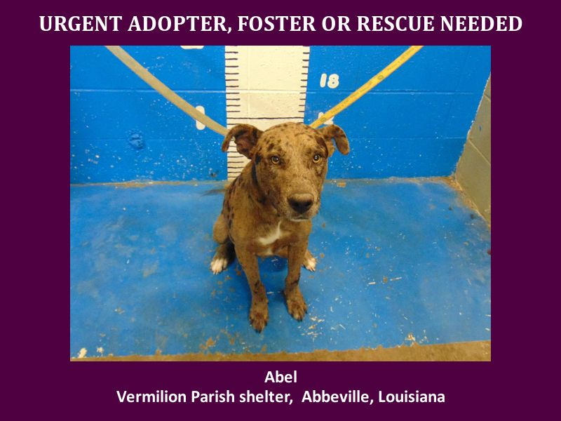 Abel Located In Kaplan La Has 2 Days Left To Live Adopt Him Now