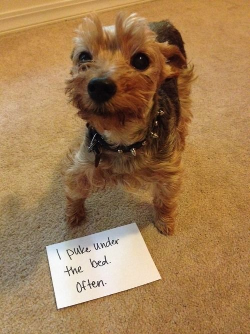 Dog Shaming. Possibly the best thing I've ever seen.