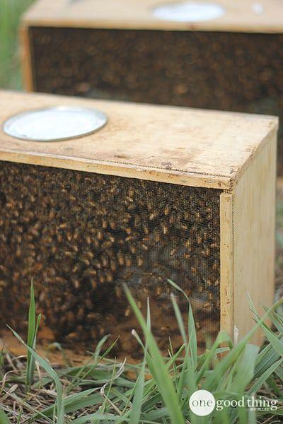 Become A Backyard Beekeeper | Backyard beekeeping, Bee ...