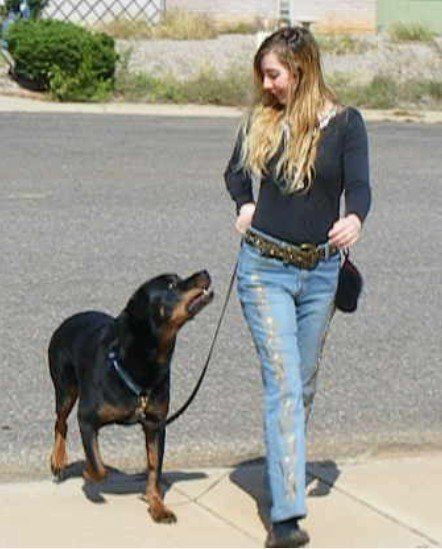 Brain Training For Dogs - By Adrienne Farricelli — Brain Training for  Dogs   Online dog training, Dog training courses, Training your dog