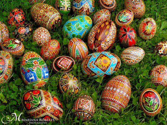 Real Traditional Ukrainian Easter Egg Hand Illustrated Poppy
