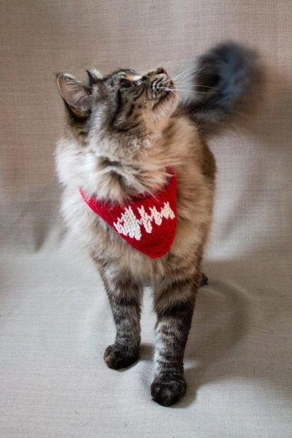 Inspiration Lovecrafts Loveknitting S New Home Knitted Cat Dog Sweaters Kitten Sweater