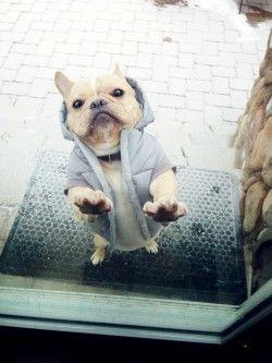 Let me in bro! on LOL Wall, by Gaba Banan