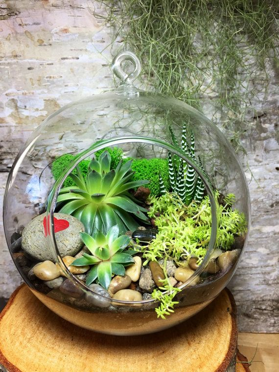 A Sweet Succulent Garden Terrarium Kit Bring Some Plant Love Into