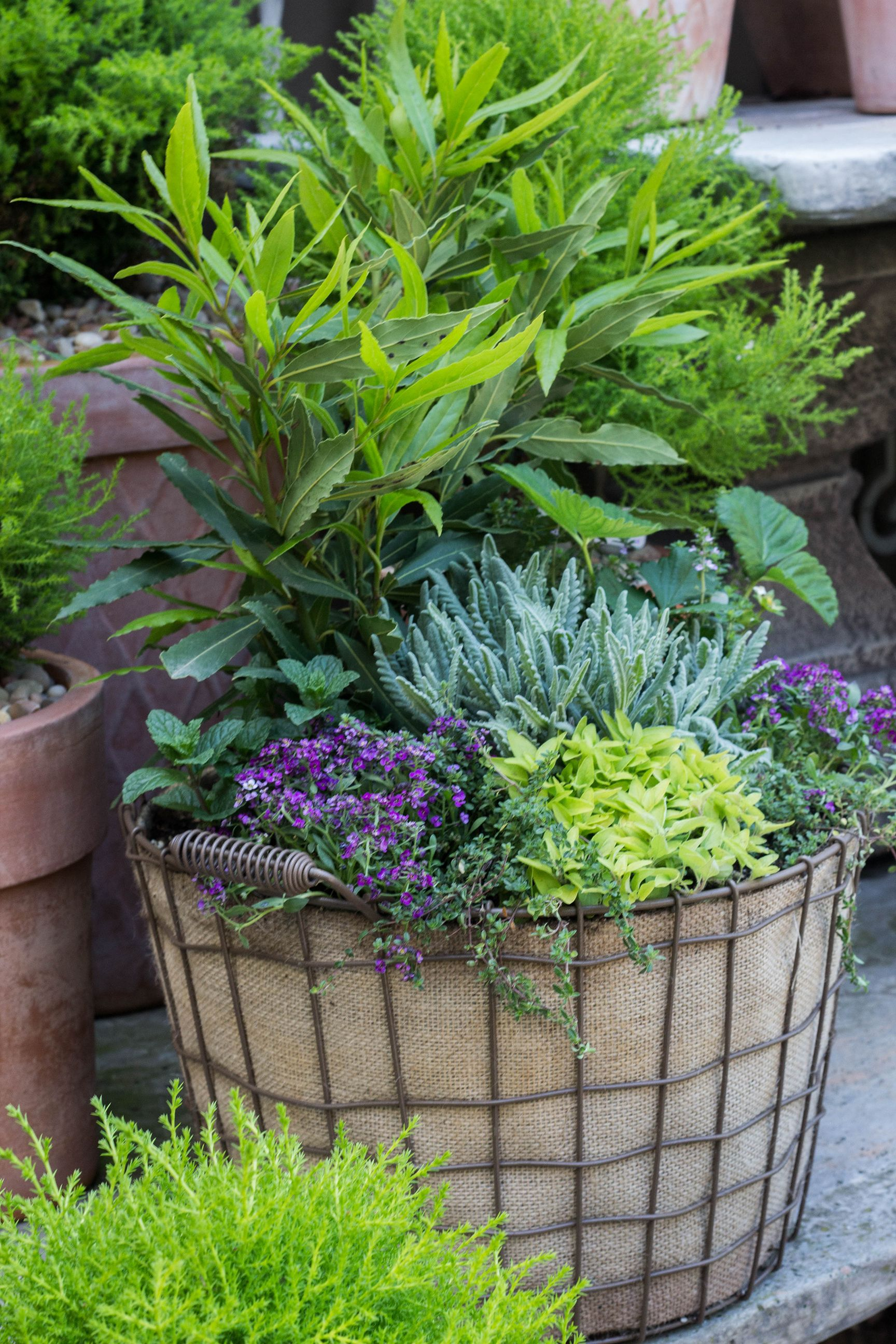 perfect for the foodie assorted herbs planted in a burlap lined
