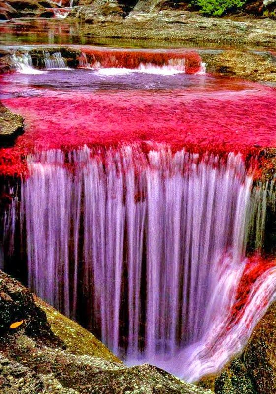 From July To November Each Year The Algae Turns Ca O Cristales Into A Veritable Color Show