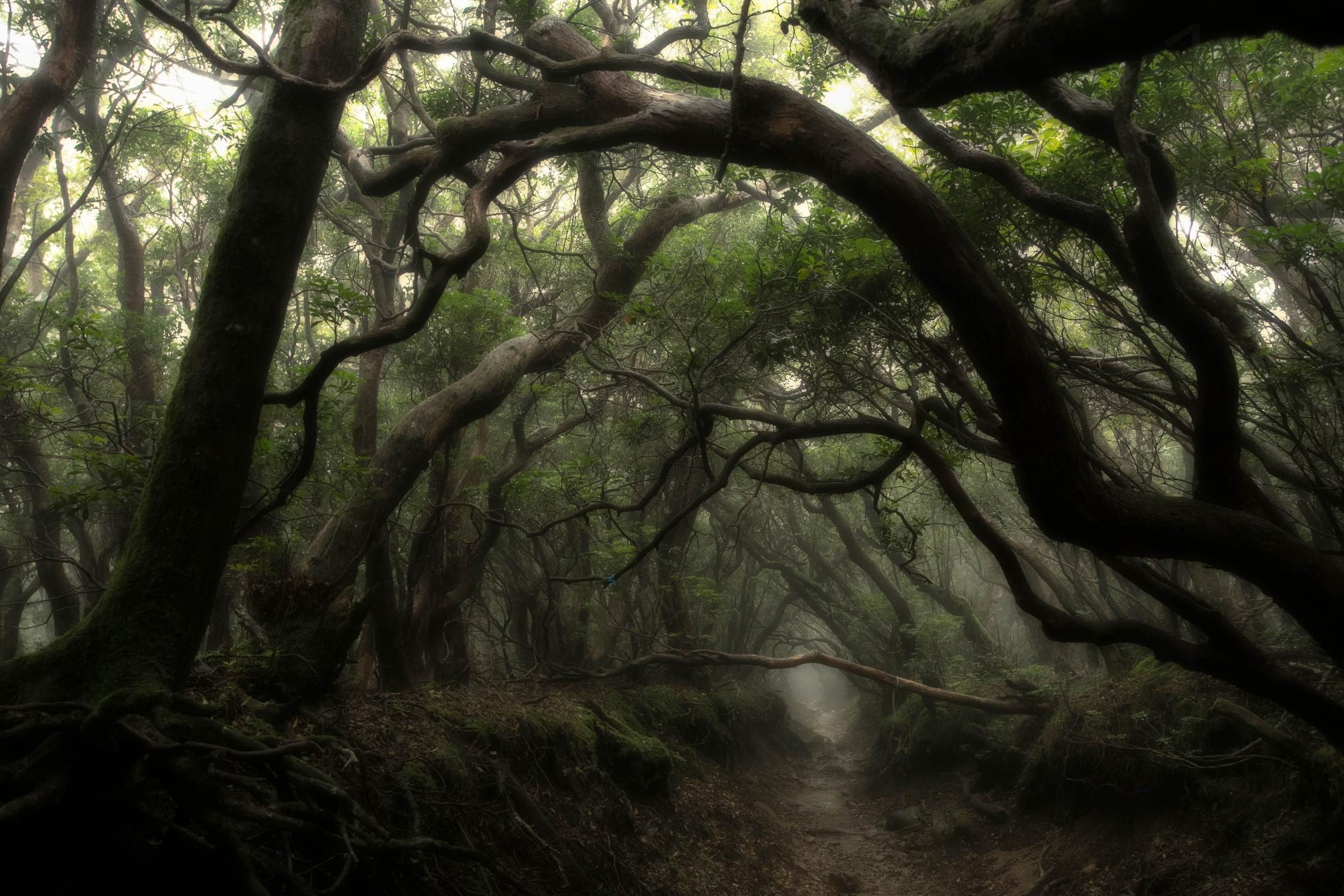 I love the enchanted, entangled nature of these trees ...